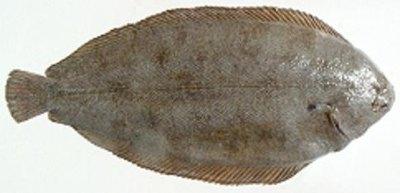 riba List